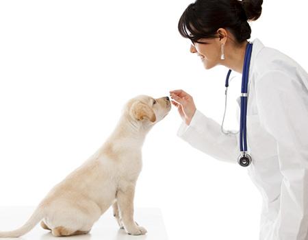 Ecografía veterinaria en Córdoba - Clínica Veterinaria en Córdoba Victoria